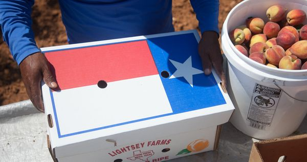 Lightsey Farms - Hands with Texas box and Peaches