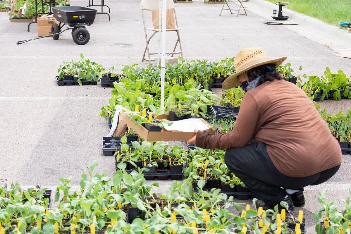 2020-09-15 STH Adriana Gathering Plants WEB.jpg