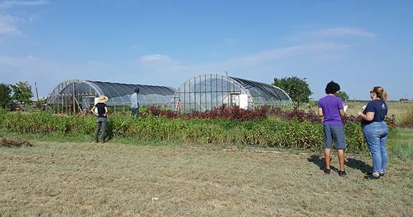 Petal Ink Farm Visit Greenhouses