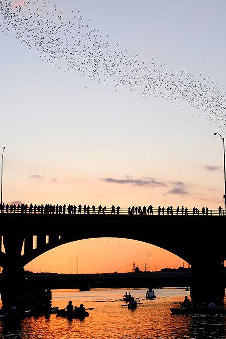 austin-bats-450px.jpg