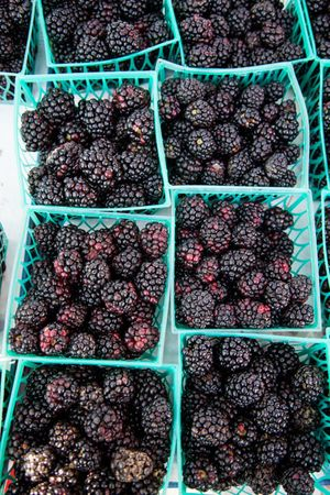 blackberries_450px.jpg