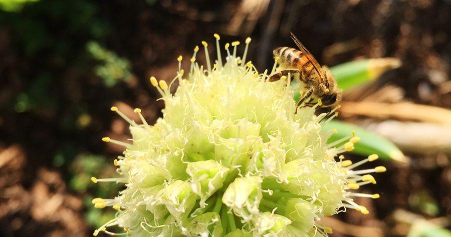 Bee-Herb-Garden_BLOG.jpg