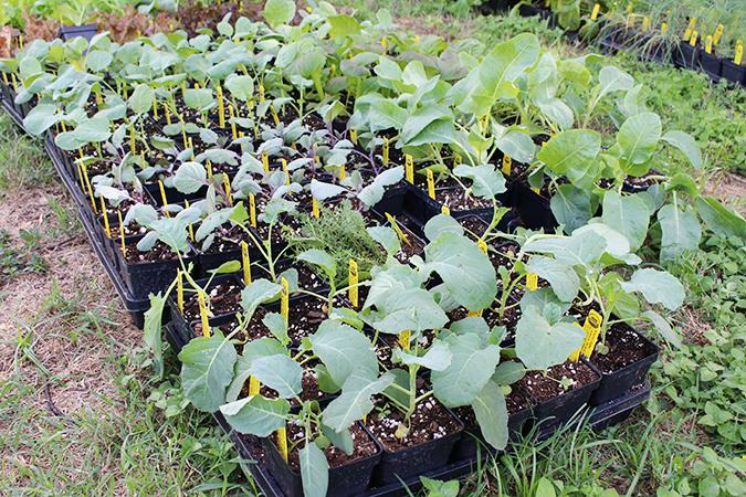 septemberplants_675px.jpg