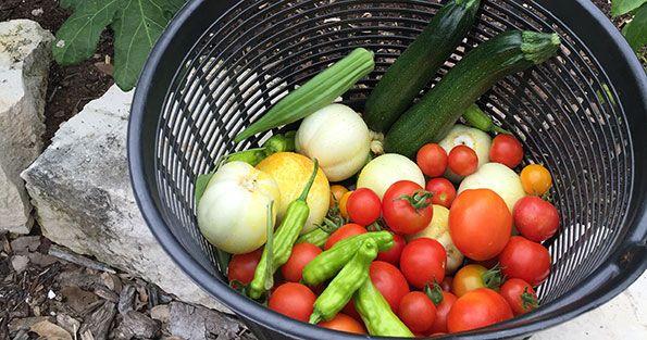 warm-season-gardening_WEBSITE.jpg