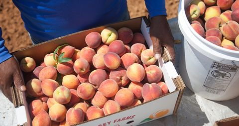 Box and Bucket of Peaches - WEBSITE.jpg