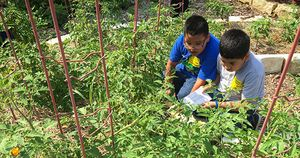 Kids in School Garden