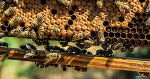 bees-on-honeycomb-free-stock-photo_WEBSITE.jpg