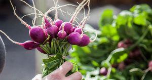 hand-holding-radish-bunch-SFC-Farmers-Market-Downtown-2014_WEBSITE-Horizontal.jpg