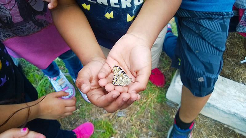 Graham-Elementary-Butterfly-Release_WEBSITE.jpg