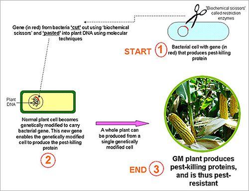 gmo chart - website.jpg