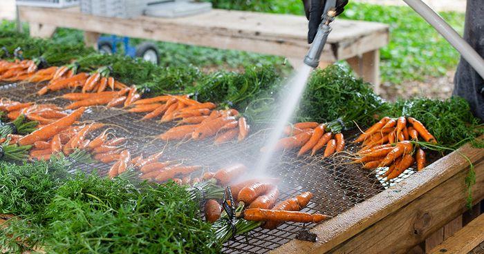 JBG-Washing-Carrots