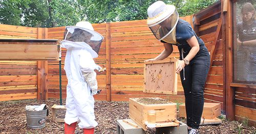 beekeeping-lesson_WEBSITE.jpg