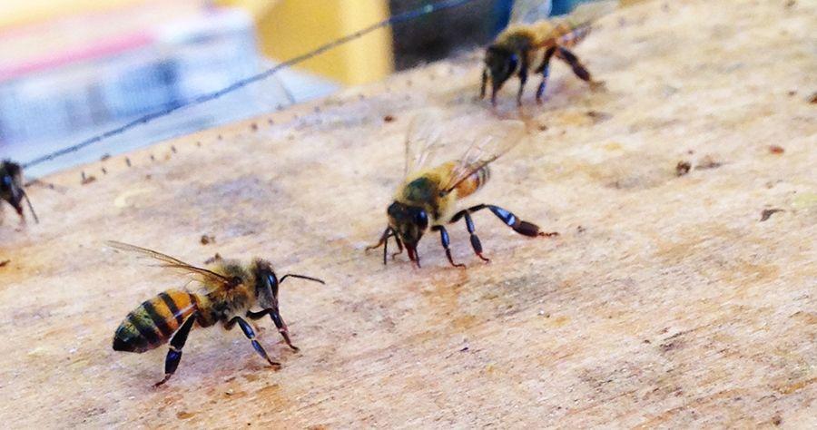 Bees-on-package_BLOG.jpg