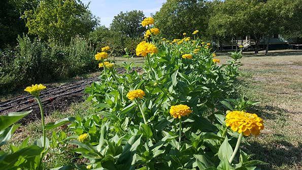 Petals Ink Farm Visit Marigolds