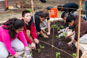 Kids-planting-tomatoes-and-basil_675px.jpg