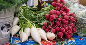 Tecolote Produce
