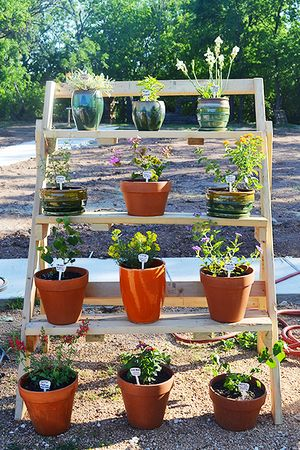 native_plant_display_450px_v2.jpeg