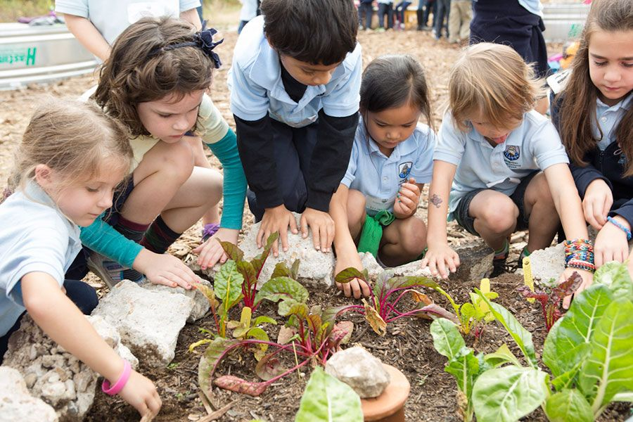 school_garden_900px.jpg