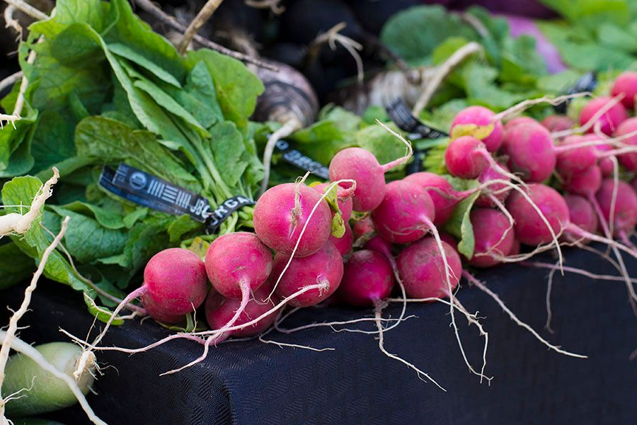 2017-10-07_Johnsons-Backyard-Garden-Radishes_WEBSITE.jpg