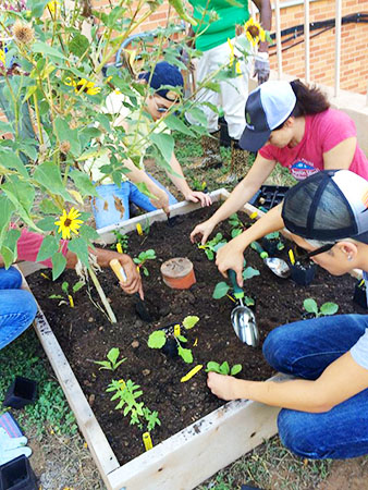 IFG_Planting raised bed_450px.jpg