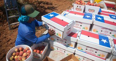Lightsey Farms Texas Peaches