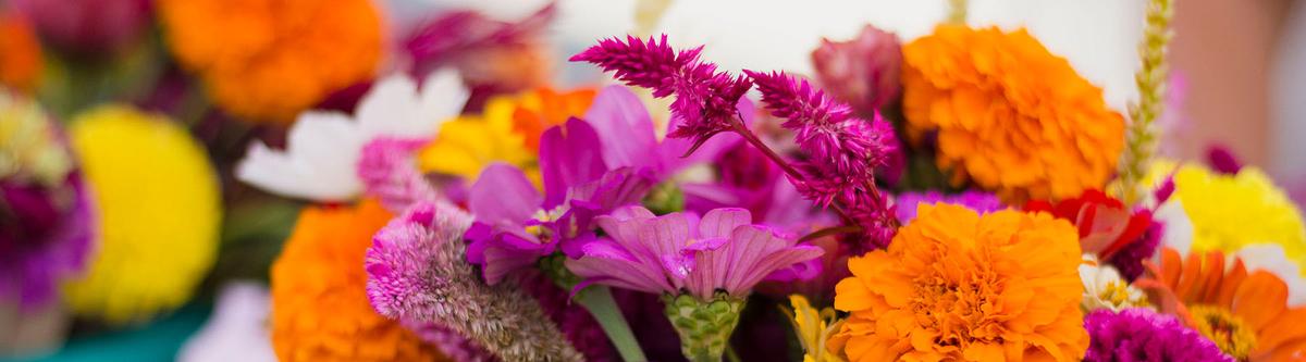 2017-09-30_Flower-Bundle_IMG-02_WEBSITE-BANNER.jpg