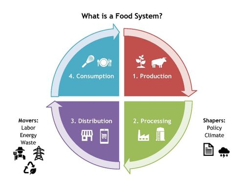 food system chart