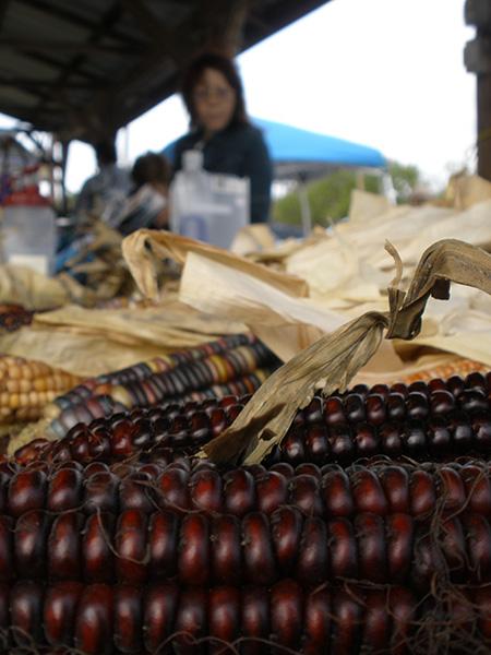 corn_450px.jpg