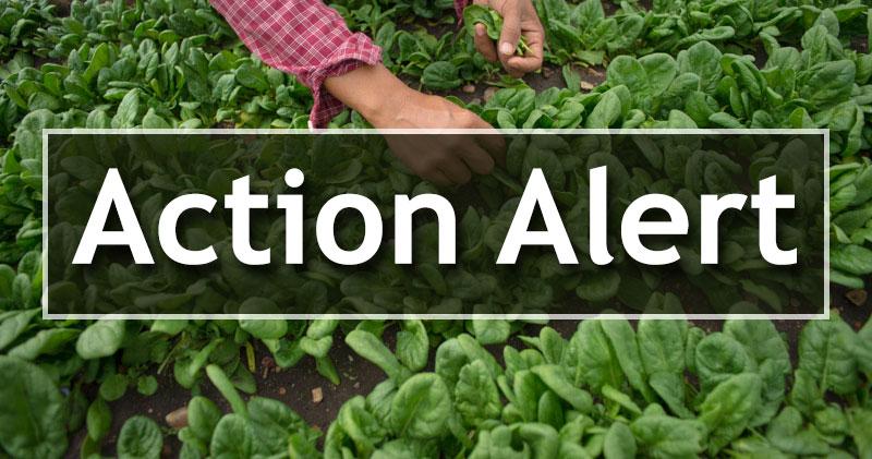 action-alert-image.jpg