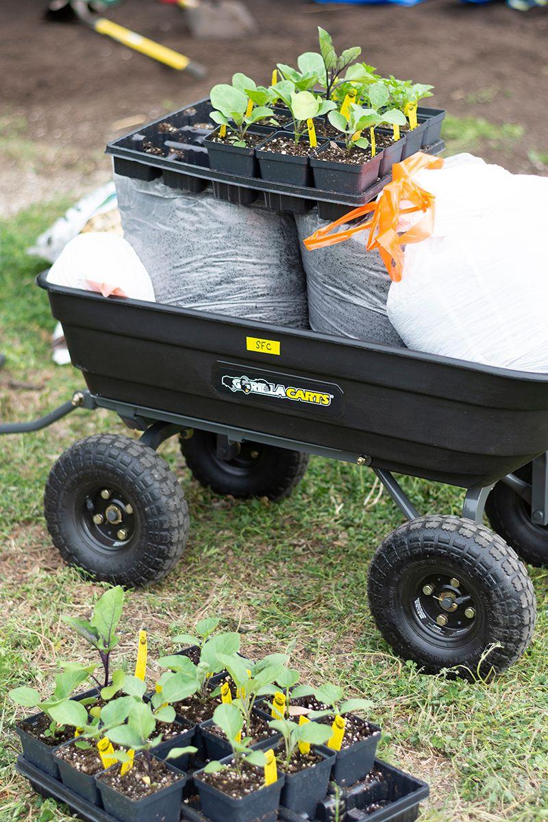 STH 2019-03-27 Seedlings and Compost in Wheelbarrow WEB.jpg