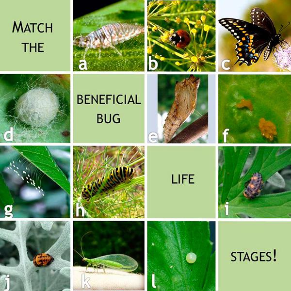 Bug-Life-Stage-Matching-Game_600px.jpg