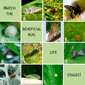 Bug-Life-Stage-Matching-Game_600px.jpg