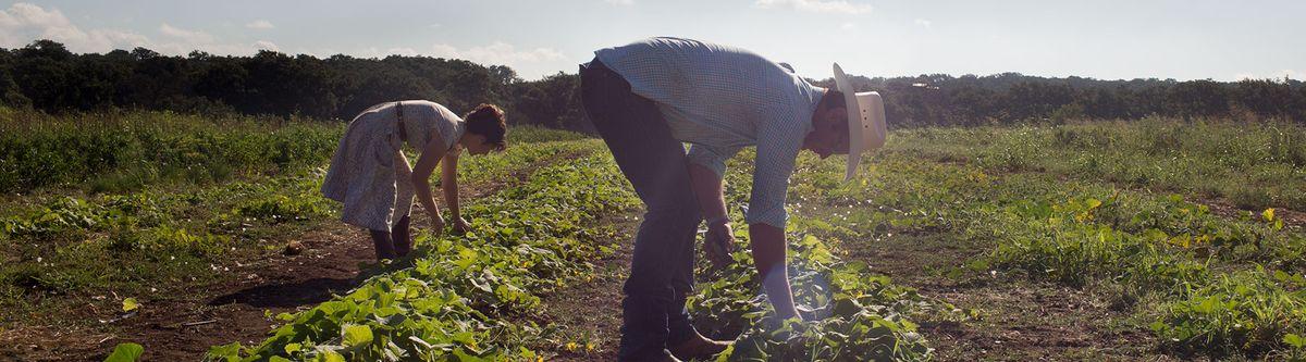 Brad and Katherine Picking Produce