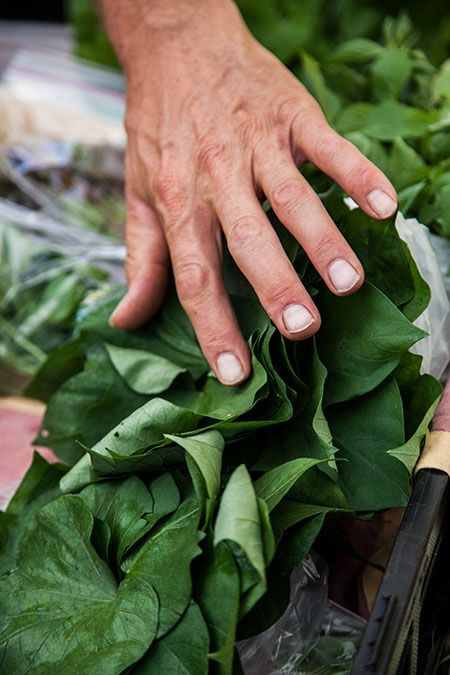 hand_over_greens_450px.jpg
