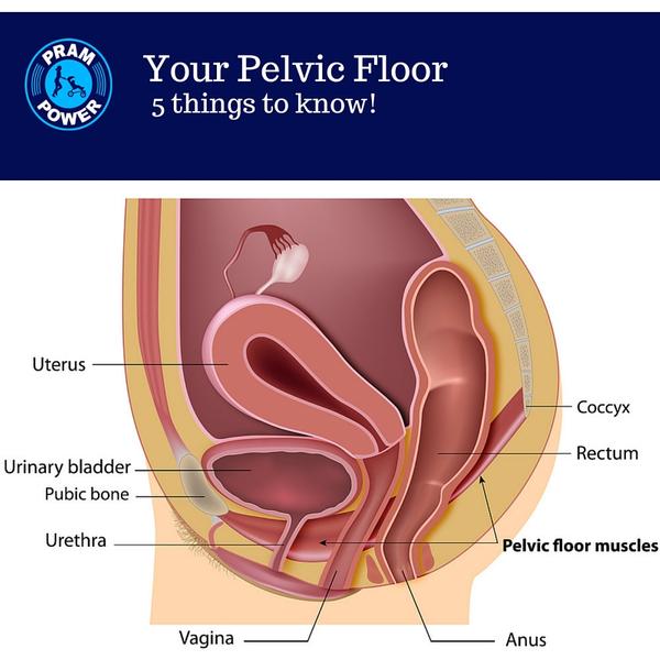 Pelvic Floor FB.jpg