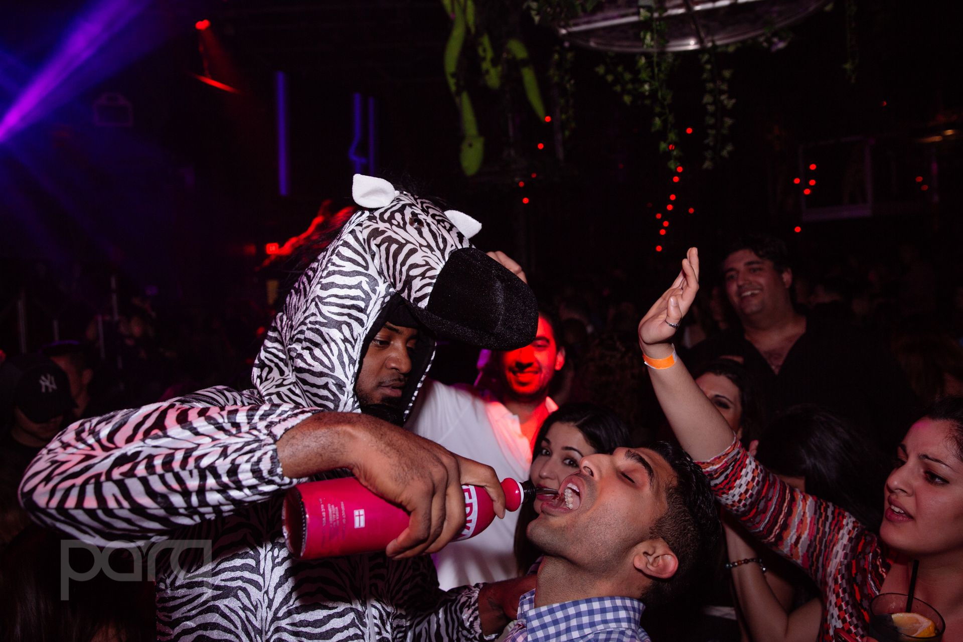 San-Diego-Nightclub-Zoo Funktion-20.jpg