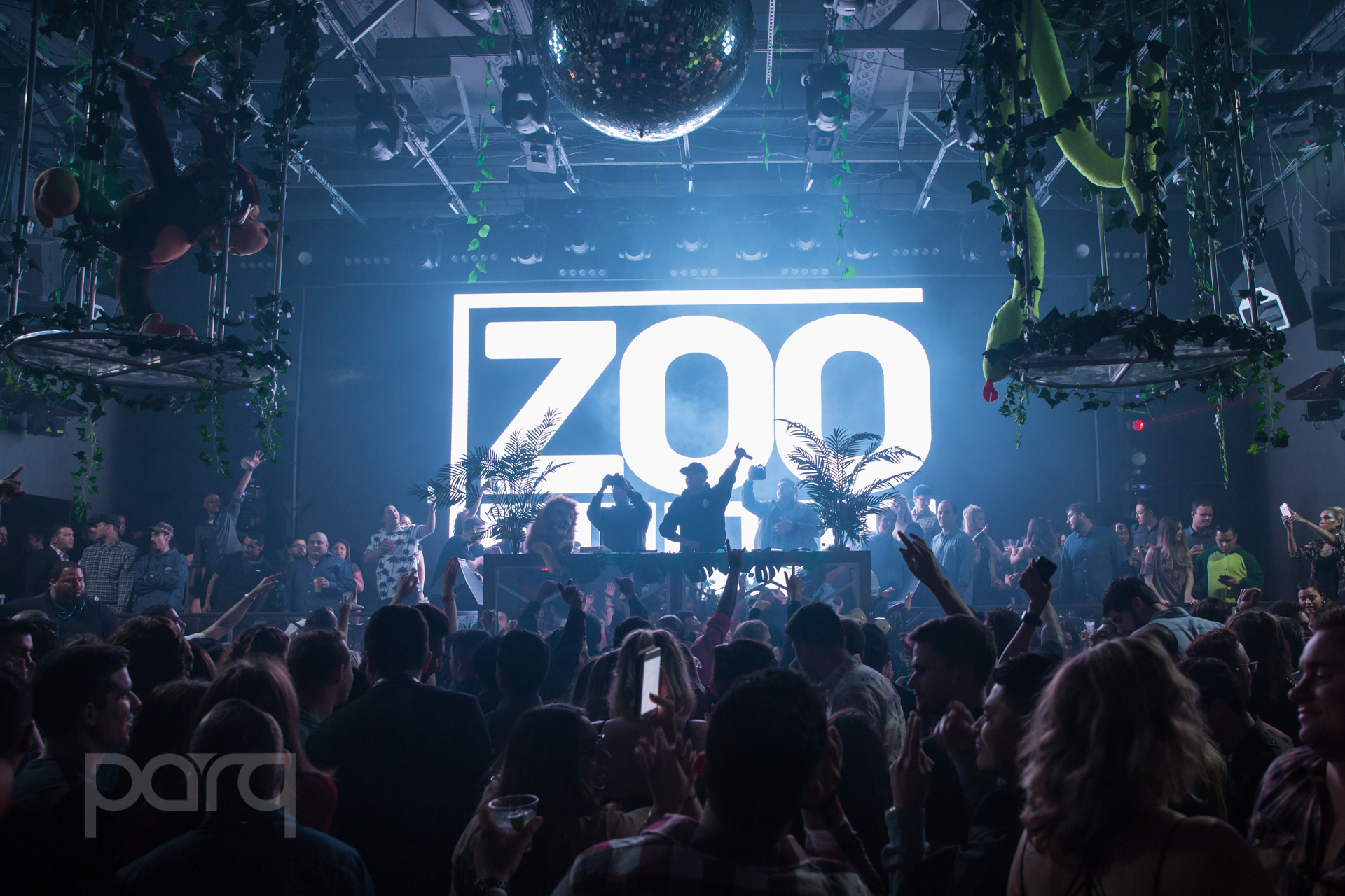 San-Diego-Nightclub-Zoo Funktion-1.jpg