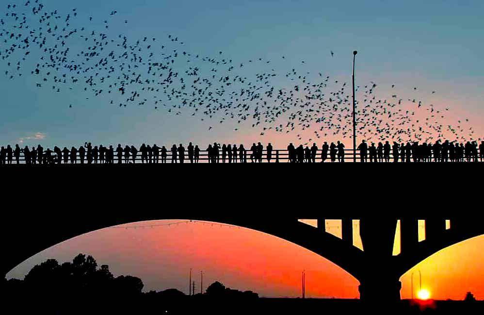 austin-bats-bridge.jpg