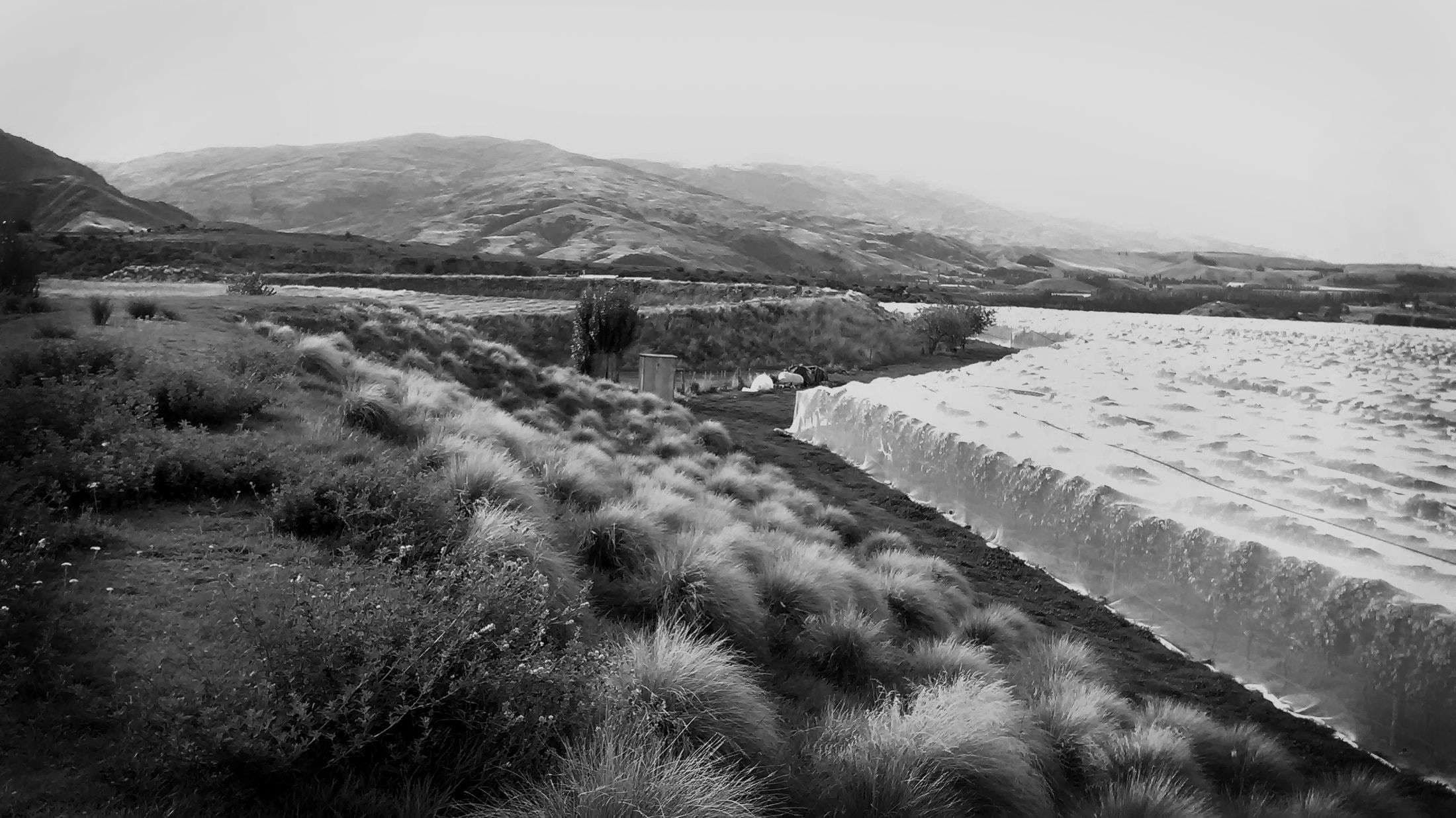 Bannockburn Vineyard