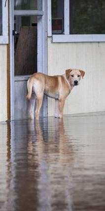Flood Dog Small WEB.jpg