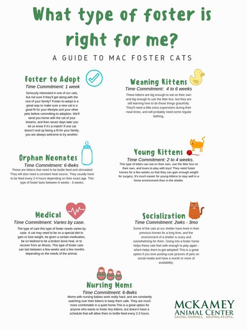 What type of foster is right for me_.jpg