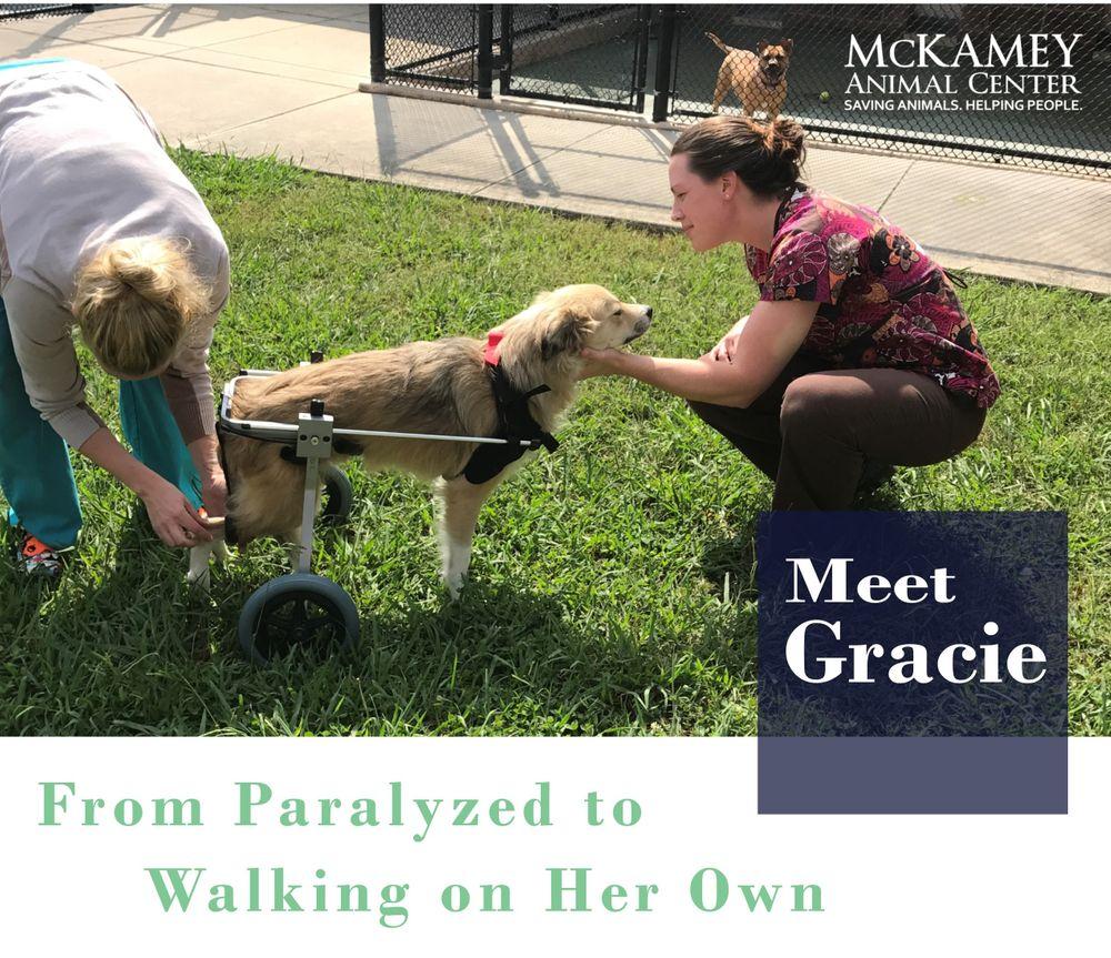 Gracie Story.jpg