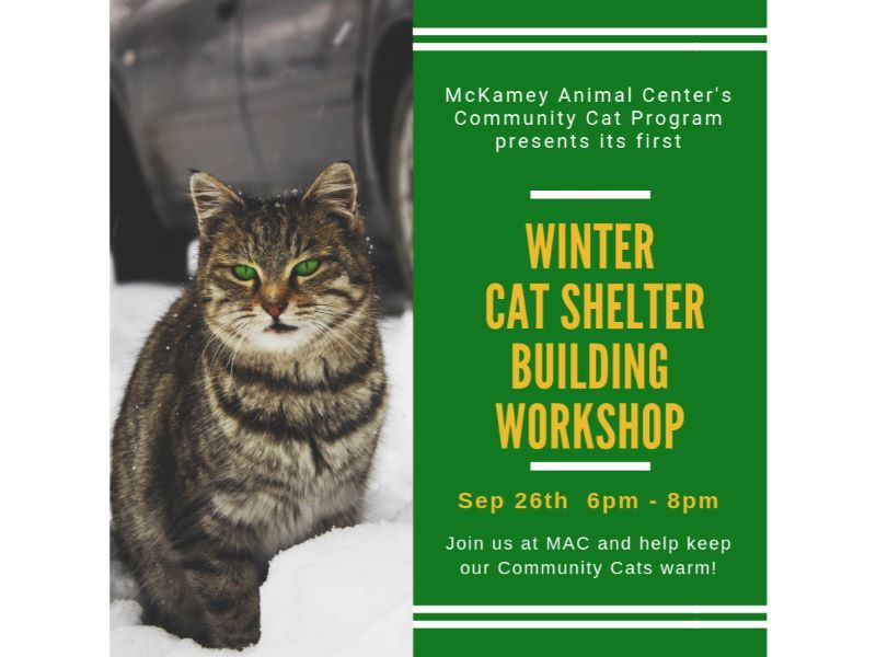 Outdoor Cat Shelter Workshop (1).jpg