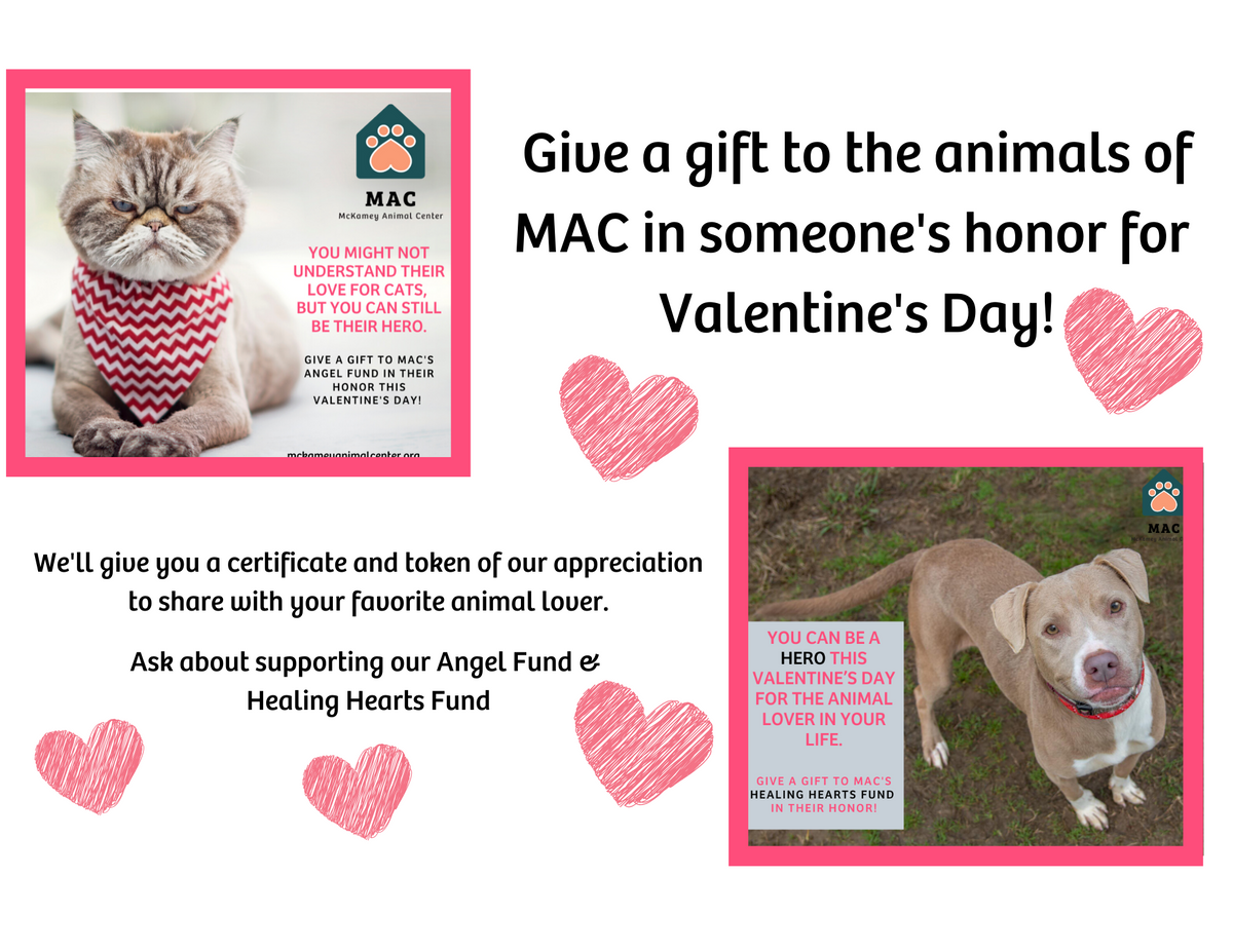 Copy of Give a gift to the Angel Fund or Healing Hearts Fund in someone's honor for Valentine's Day..png