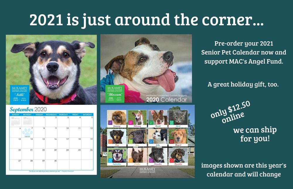 Purchase your MAC 2020 Senior Pet Calendar today!.jpg