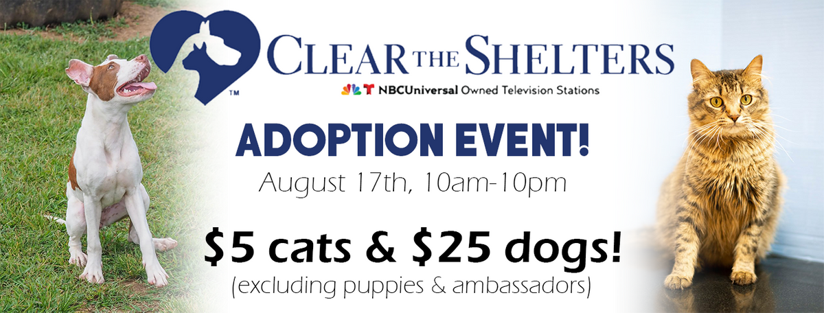 Clear the Shelter website.png