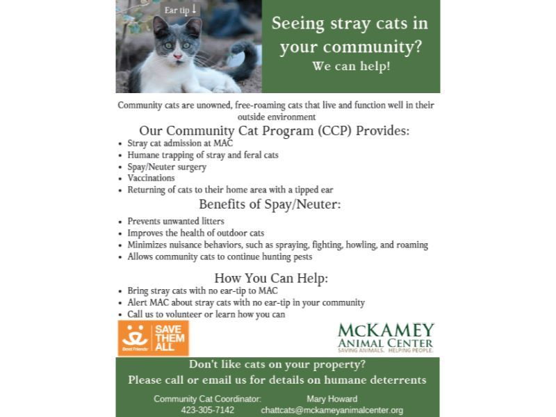 Community Cats - McKamey Animal Center on heated cat house plans, cat feeding station plans, cat shelter plans, fancy cat house plans, outdoor cat house plans, winter cat house plans, mallard house plans, cat enclosure plans, homesteaders house plans, furniture building plans, kitty house plans, rabbit house plans, cat tree house plans, wood cat house plans, raccoon house plans, squirrel house plans, bear house plans, dog house plans, wooden cat house plans, pet cat house plans,