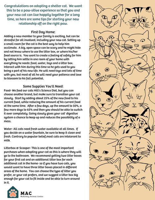 Your New Cat.jpg