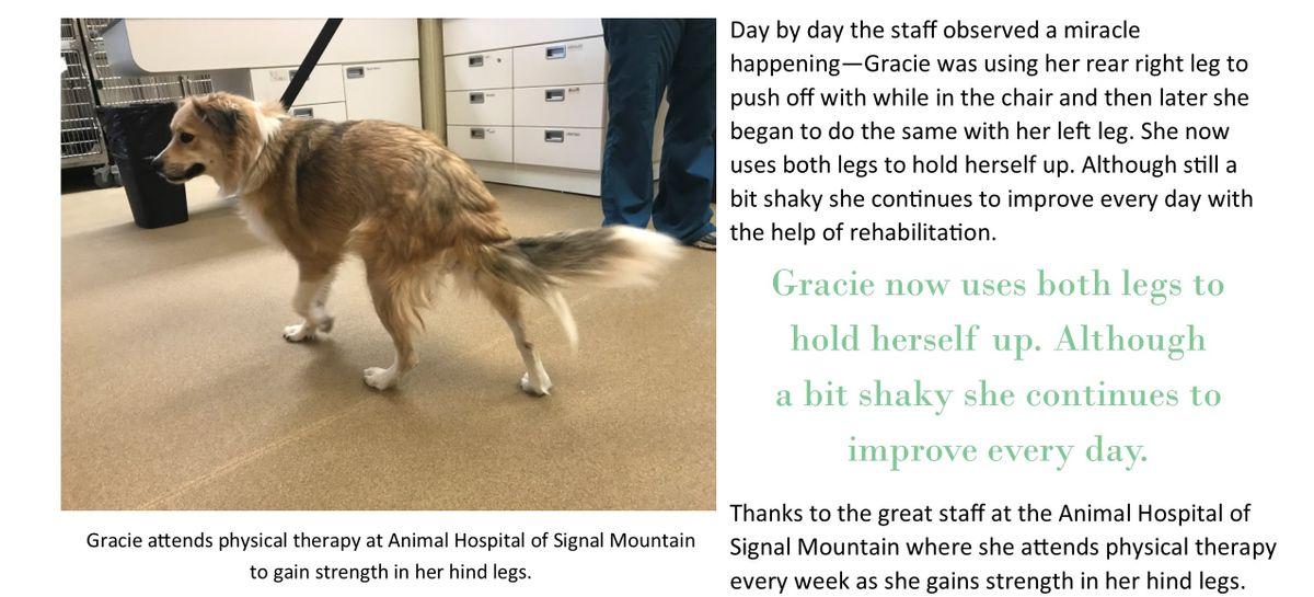 Gracie Story4.jpg