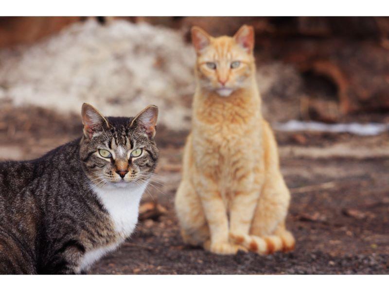 Feral-Cat-3.jpg